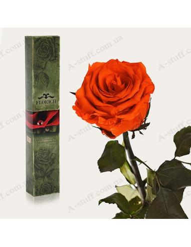 """Довгосвіжа троянда """"Вогняний Янтар"""""""
