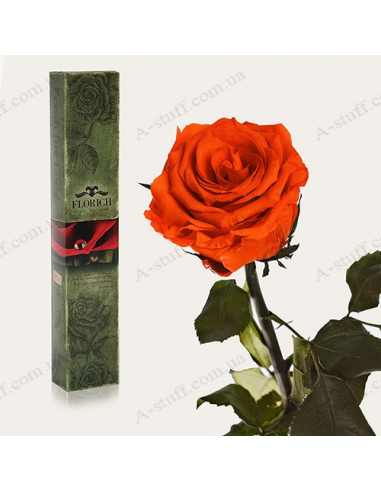 "Long-lasting rose ""Fiery Amber"""