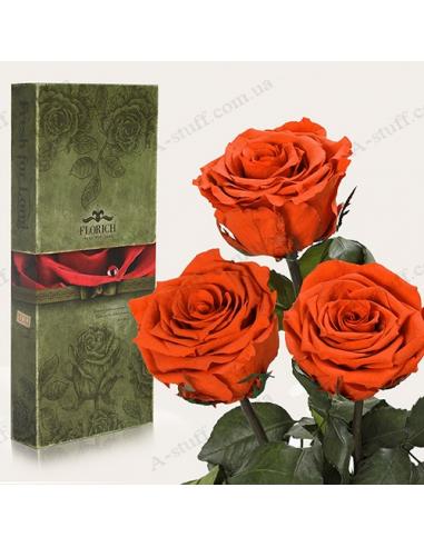 """Долгосвежая роза """"Огненный Янтарь"""" (букет из 3 шт.)"""