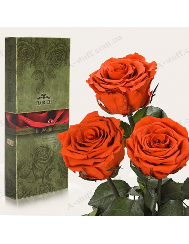 "Long-lasting rose ""Fiery Amber"" (bouquet of 3 pcs.)"
