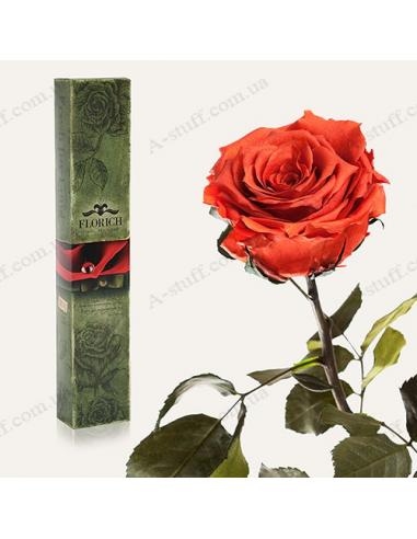 """Довгосвіжа троянда """"Кавовий Топаз"""""""