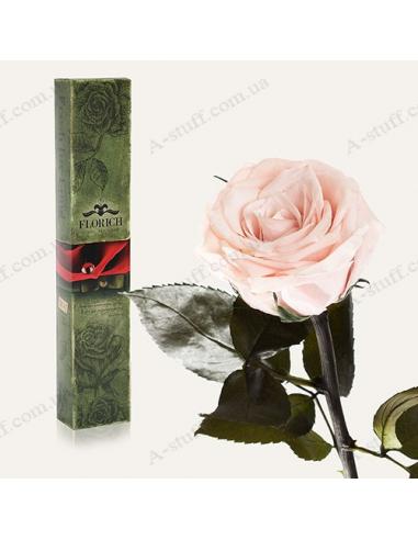 """Довгосвіжа троянда """"Рожеві Перли"""""""