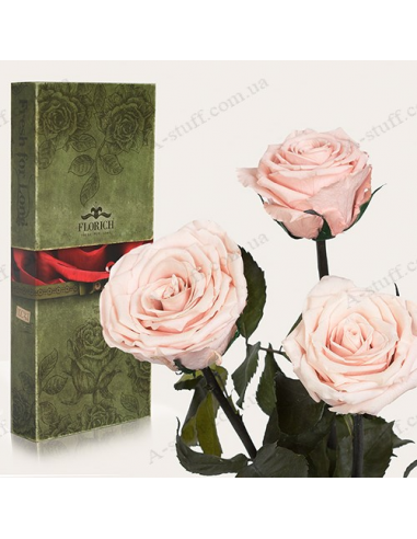 "Long-lasting rose ""Pink Pearl"" (bouquet of 3 pcs.)"