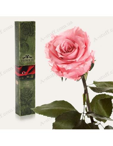 "Долгосвежая роза ""Розовый Кварц"""