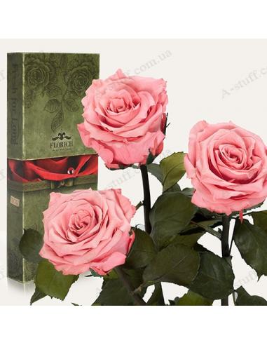 """Долгосвежая роза """"Розовый Кварц"""" (букет из 3 шт.)"""
