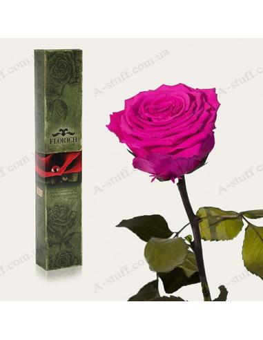 """Довгосвіжа троянда """"Малиновий Родоліт"""""""