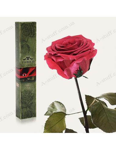 """Довгосвіжа троянда """"Рожевий Корал"""""""