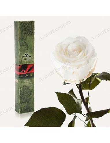 """Долгосвежая роза """"Белый Бриллиант"""""""