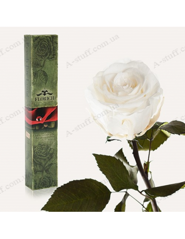 "Long-lasting rose ""White Diamond"""