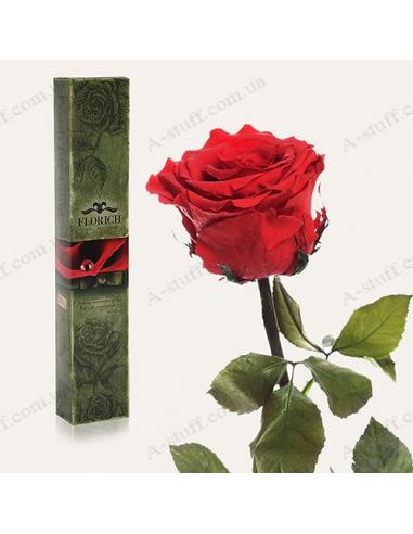 """Долгосвежая роза """"Алый Рубин"""""""