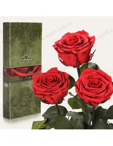 """Довгосвіжа троянда """"Алий Рубін"""" (букет з 3 шт.)"""