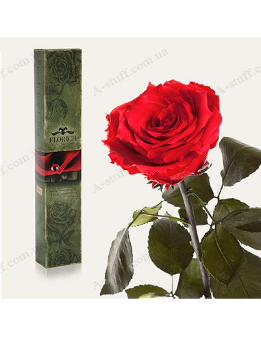 """Долгосвежая роза """"Красный Рубин"""""""