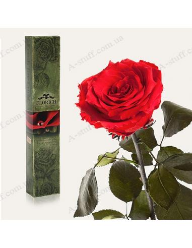 """Довгосвіжа троянда """"Червоний Рубін"""""""