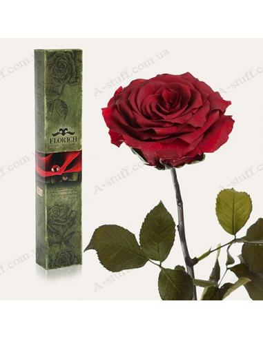 """Довгосвіжа троянда """"Багряний Гранат"""""""