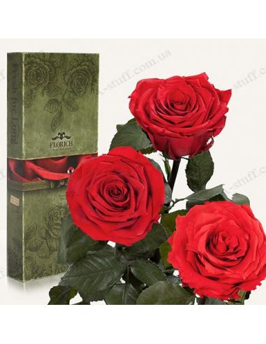 """Довгосвіжа троянда """"Червоний Рубін"""" (букет з 3 шт.)"""