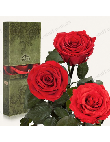 "Long-lasting rose ""Red Ruby"" (bouquet of 3 pcs.)"