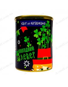 """Растение в консервной банке """"Новогодний клевер"""""""